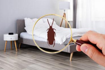 Jemand hält eine Lupe vor ein Bett und sieht eine Milbe